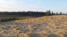Distinct in the entire Arctic, the Great Kobuk Sand Dunes offer stark contrast to the surrounding, encroaching northern boreal forest.