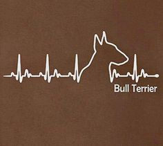 Bill Terrier Heartbeat...
