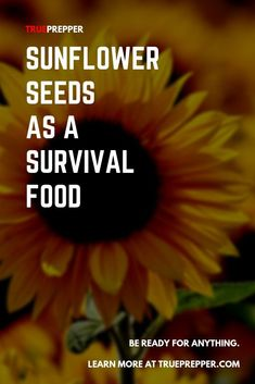 Long-term food storage has one rival when it comes to the best food for survival: renewable food sources. Best Survival Food, Survival Tips, Healthy Camping Snacks, Camping Recipes, Camping Meals, Sunflower Seeds Nutrition, Camping Food Checklist, Camping Tricks, Cold Pressed Oil