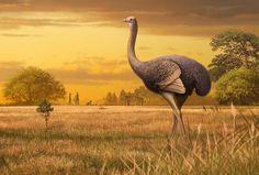 Flightless bird three times the size of an ostrich used to roam Europe Extinct Birds, Extinct Animals, Prehistoric Animals, Rare Animals, Early Humans, Flightless Bird, Animal Bones, Vertebrates, New Zealand