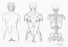 Random anatomy sketches 8 by RV1994 on DeviantArt