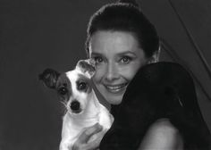 Audrey Hepburn and Jack Russell pup
