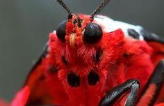 Top 10 Macro Insect Fur Shots