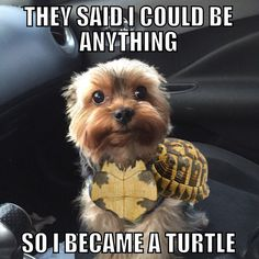 Dogs Funny Yorkie So Cute 44 Trendy Ideas Yorkies, Yorkie Dogs, Chihuahua, Baby Animals, Funny Animals, Cute Animals, Yorkshire Terrier, I Love Dogs, Puppy Love
