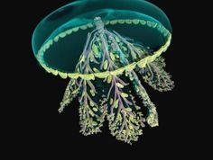 fond-marin-méduse-étrange-couleurs-uniques