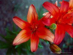 pretty flowers | pretty! - Flowers Wallpaper (247619) - Fanpop fanclubs