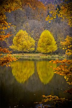 Tree twins in the autumn - with the water reflection a beautiful mood. Beautiful World, Beautiful Places, All Nature, Mellow Yellow, Monet, Beautiful Landscapes, Autumn Leaves, Autumn Trees, Wonders Of The World