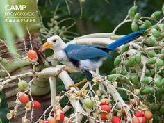 No hay manera de alejar a los pequeñitos en #mayakoba de los frutos dulces de los manglares #naturaleza #pajarito #fotografíadeaves #observacióndeaves #ecoturismo #bebe #lindos #frita #vidasilvestre