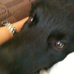 My dog  Black!!!!!!