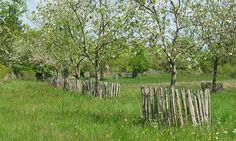 Meadow Garden, Dream Garden, Vegetable Garden, Country Landscaping, Garden Landscaping, Orchard Design, Orchards, Private Garden, Organic Farming