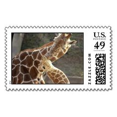 >>>Best          reticulated giraffes postage stamps           reticulated giraffes postage stamps we are given they also recommend where is the best to buyDeals          reticulated giraffes postage stamps Review from Associated Store with this Deal...Cleck Hot Deals >>> http://www.zazzle.com/reticulated_giraffes_postage_stamps-172599688804755647?rf=238627982471231924&zbar=1&tc=terrest