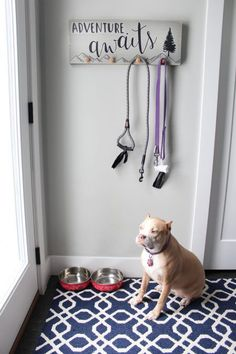 Paper Riot Co. || Create this fun DIY Dog Leash Hanger Sign using Let's Get Lost Wall Decals by Paper Riot Co. Your pooch will love it!