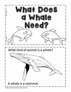 Animal Book for Whale Needs – Animal Kingdom Little Books, Good Books, Leaf Identification, Family Print, Silhouette S, Chapter Books, Children's Literature, East Africa, Land Art