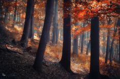 Mystic Forest by Ildiko Neer on 500px
