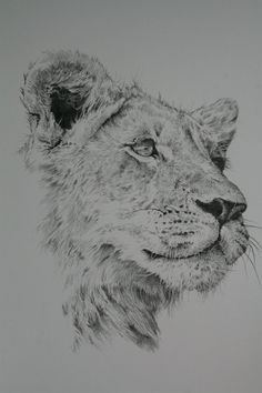 lioness pencil drawing | Lioness Pencil Drawing Lioness by michael jordan