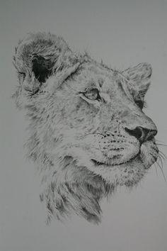 lioness pencil drawing | Lioness Pencil Drawing Lioness by michael jordan