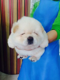 The Marshmallow Dog | The 100 Most Important Dog Photos Of All Time