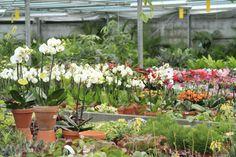 Mooie orchideeën in