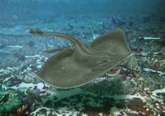 skate swimming - - Yahoo Image Search Results