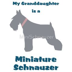 My Granddaughter is a Miniature Schnauzer