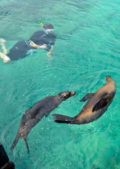 Swimming with sea lions - Isla Isabela, Galapagos