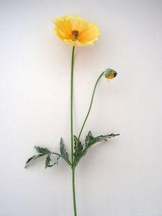 Yellow Artificial French Poppy