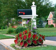 Landscaping Around Mailbox Flower Bed Around Mailbox With Flowerbed Mailbox Garden Flowers Landscaping Ideas Mailbox Area Mailbox Planter, Mailbox Garden, Mailbox Landscaping, Lawn And Garden, Backyard Landscaping, Diy Landscaping Ideas, Natural Landscaping, Florida Landscaping, Landscaping Software