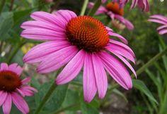 Flower image | Flowers Plants Trees Gardening photos