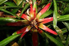 Como Cultivar Plantas em Ambientes Internos Com Pouca Luz | Flores - Cultura Mix