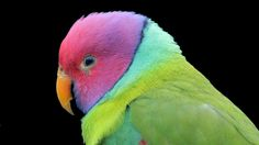multi color parrot bird wallpaper download free high quality size