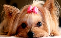 cute puppies pictures | Cute Puppies :) - Puppies Wallpaper (22040893) - Fanpop fanclubs