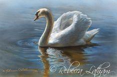 Serenade in Blue - Mute Swan Watercolor Painting