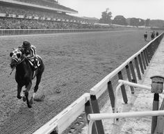 "What else can be said about the legendary winner of the Triple Crown?  Since 1923, 21 Triple Crown hopefuls have lost at the infamous 1-1/2 mile long Belmont Stakes. At the finish, Secretariat won by 31 lengths and ran the fastest 1½ miles on dirt in history, 2:24 flat, a record that still stands. Chic Anderson said it all while calling the 105th running of the Belmont Stakes, ""SECRETARIAT IS WIDENING NOW...HE IS MOVING LIKE A TREMENDOUS MACHINE!"""