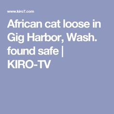 African cat loose in Gig Harbor, Wash. found safe | KIRO-TV