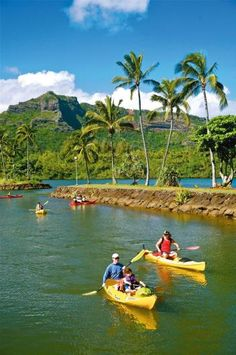 It's morning on Kauai. The water fronting the Wailua Marina is as smooth as glass. Suddenly, a fleet of kayaks drops in, breaking the water's surface in a series of splashes and ripples. The neon yellow and orange boats bob and bounce off one another, a colorful logjam.