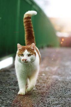#shrewd #cat