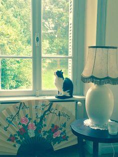 Lilly on the window-sill in Le Salon des Nuages, at 19th century Château de Montvason, Normandy Normandy, Window Sill, 19th Century, Windows, Black And White, Room, Ideas, Home Decor, Cloud