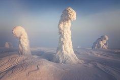 (Niccolo Bonfadini) Snow covered trees near Arctic Circle resemble alien planet Alien Planet, Planet Earth, Magical Pictures, Photo Print, Snow Covered Trees, Arctic Circle, Winter Trees, Snow Trees, Natural Phenomena