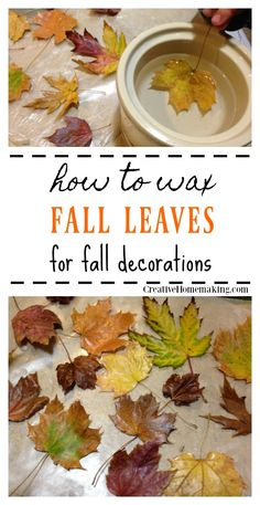 Easy instructions for making waxed fall leaves for autumn or Thanksgiving decorations. Easy instructions for waxing fall leaves for autumn or Thanksgiving decorations. Autumn Leaves Craft, Autumn Crafts, Summer Crafts, Holiday Crafts, Thanksgiving Diy, Thanksgiving Decorations, Fall Decorations, Autumn Decorating, Pumpkin Decorating