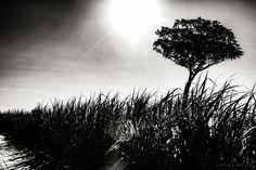 Tree on a Reed II by Eduardo Vilela