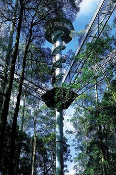 The Otway Fly Tree Top Adventures