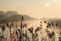 Morning mist on the Somerset Levels.