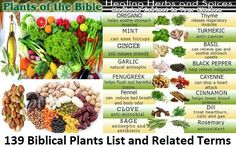 Foods of the Bible | A list of more plants mentioned in the Bible for a Bible Garden