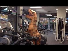 d337cf7f0df3429fdfc22347f4a75039 t rex costume ultimate workout handsome dancer coincidance music pinterest funny videos