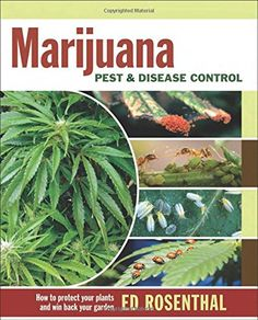 A wide range of pests diseases and nutrient deficiencies can zap the vitality of any cannabis garden. Inexperienced gardeners often rely on pesticides that are not registered for edibles as well as...