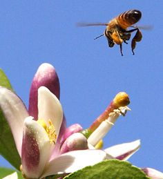 A comprehensive list of beekeeping resources and conferences around the U.S.