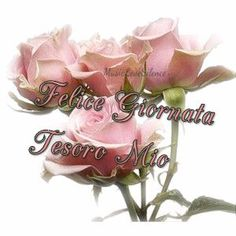 Felice Giornata Tesoro Mio – MusicLoveSilence