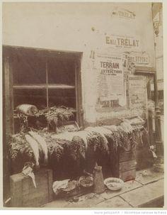 [Etalage de poissons] : [Rue Daubenton] : [photographie] / [Atget] 1898-1912