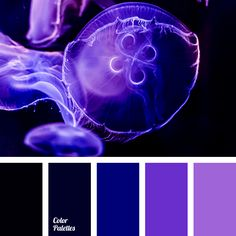 Free collection of color palettes ideas for all the occasions: decorate your house, flat, bedroom, kitchen, living room and even wedding with our color ideas. Neon Colour Palette, Purple Color Schemes, Purple Color Palettes, Color Combos, Color Blue, Red Color Pallets, Color Balance, Design Seeds, Color Swatches