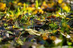 Mooie herfstkleuren - 2012